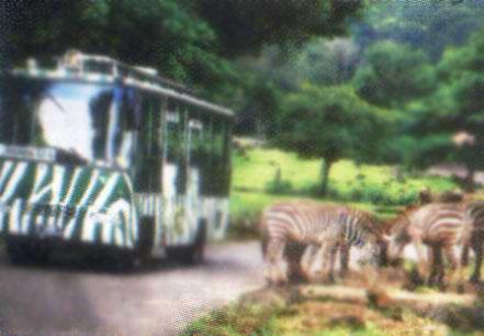 Taman Safari Indonesia Ii Prigen Pasuruan Jawa Timur Pusaka Kebun