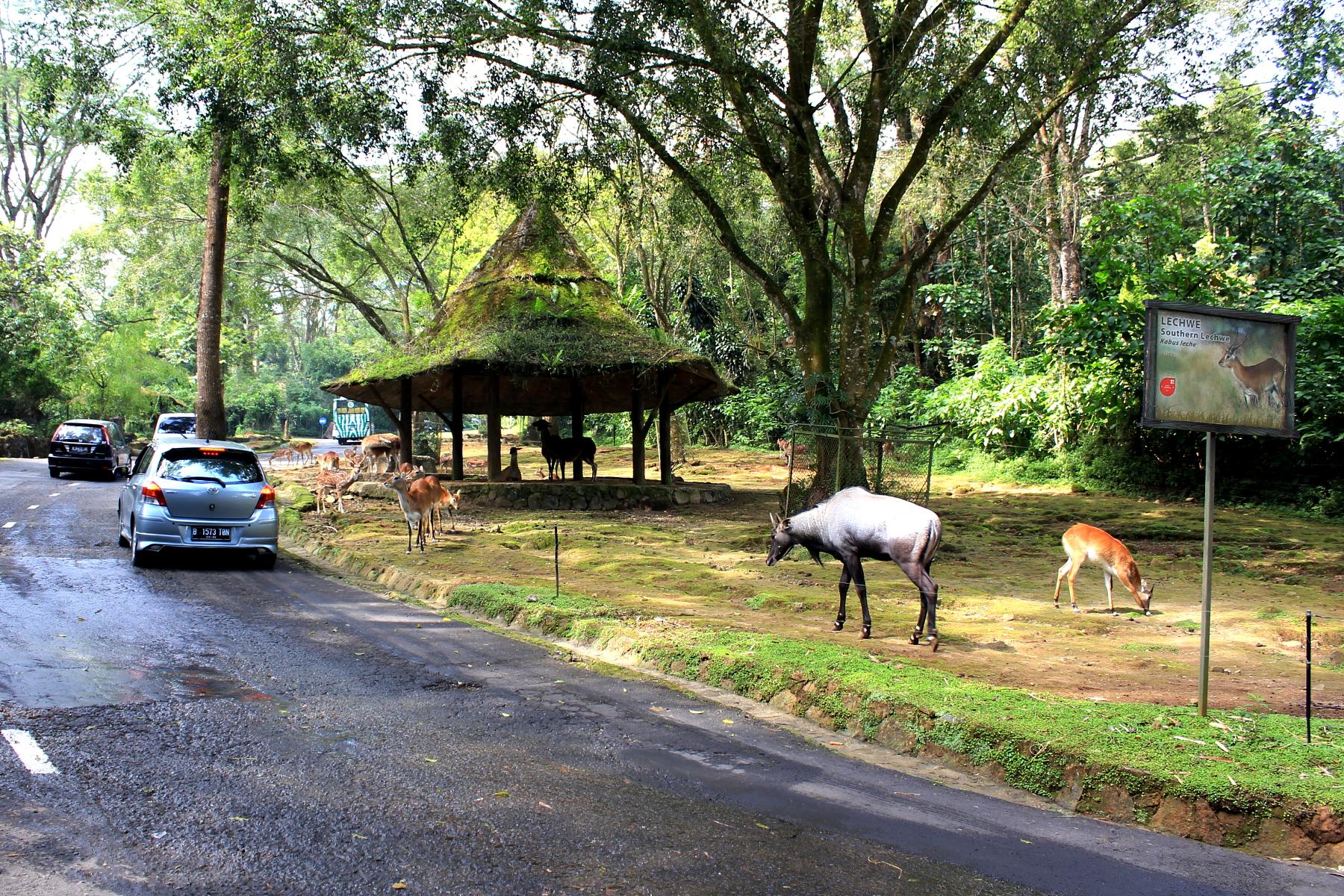 Taman Safari Indonesia Wikipedia Bahasa Ensiklopedia Bebas Jpg 2 Kab
