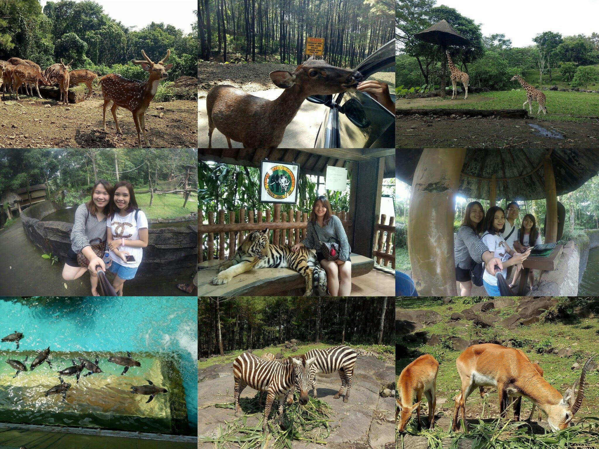 Taman Safari Prigen Pasuruan Jawa Timur Vlog02 Youtube Indonesia 2
