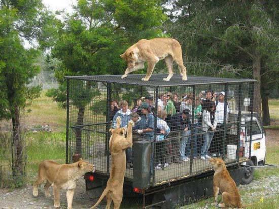 Taman Safari Prigen Pasuruan Menelusuri Tempat Wisata Indonesia Kedua Setelah