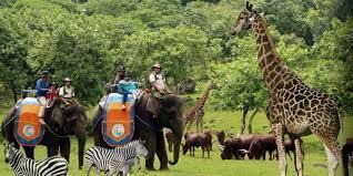Tempat Wisata Jawa Timur Patut Dikunjungi 9fantastic Taman Safari Prigen