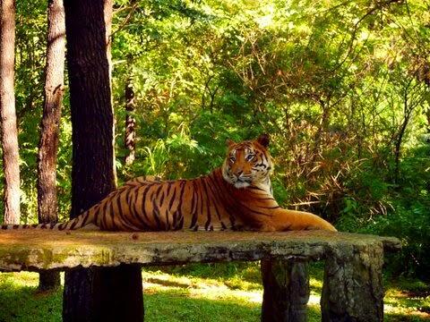 Tourism Live Pasuruan Taman Safari Indonesia Ii Julukan Nama Aslinya