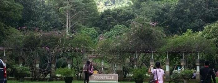 Dinas Kebudayaan Pariwisata Kab Pasuruan Kebun Raya Purwodadi Tretes Treetop