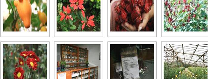 Dinas Kebudayaan Pariwisata Kab Pasuruan Nongkojajar Condido Agro Tretes Treetop