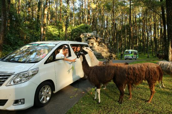 Top 10 Tretes Treetop Adventure Park Prigen Taman Safari Kab