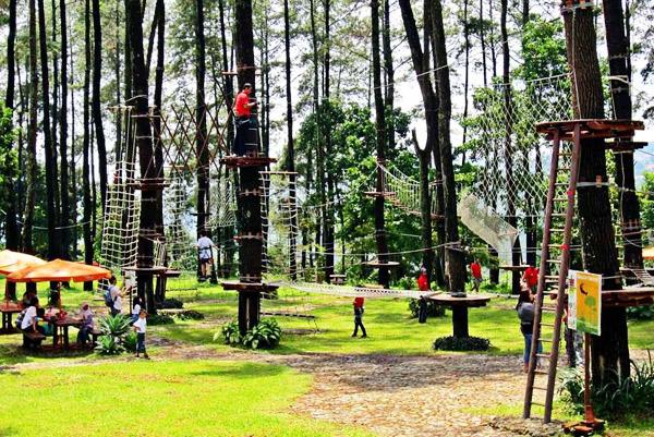 Treetop Adventure Park Petualangan Ketinggian Pepohonan Indonesia Tretes Kab Pasuruan