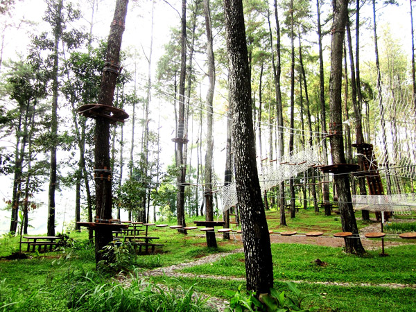 Treetop Adventure Park Petualangan Ketinggian Pepohonan Tantangan Menantang Secara Fisik