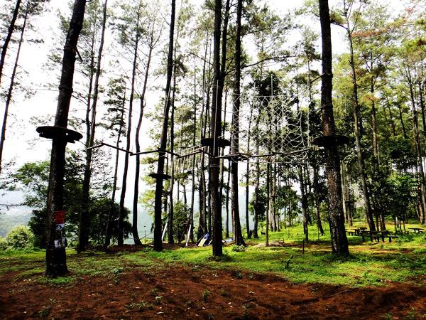 Treetop Adventure Park Petualangan Ketinggian Pepohonan Tretes Jalan Raya Trawas