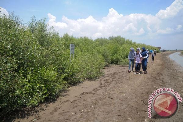 Desa Sambilawang Merintis Wisata Hutan Mangrove Pati Keberadaan Kecamatan Trangkil