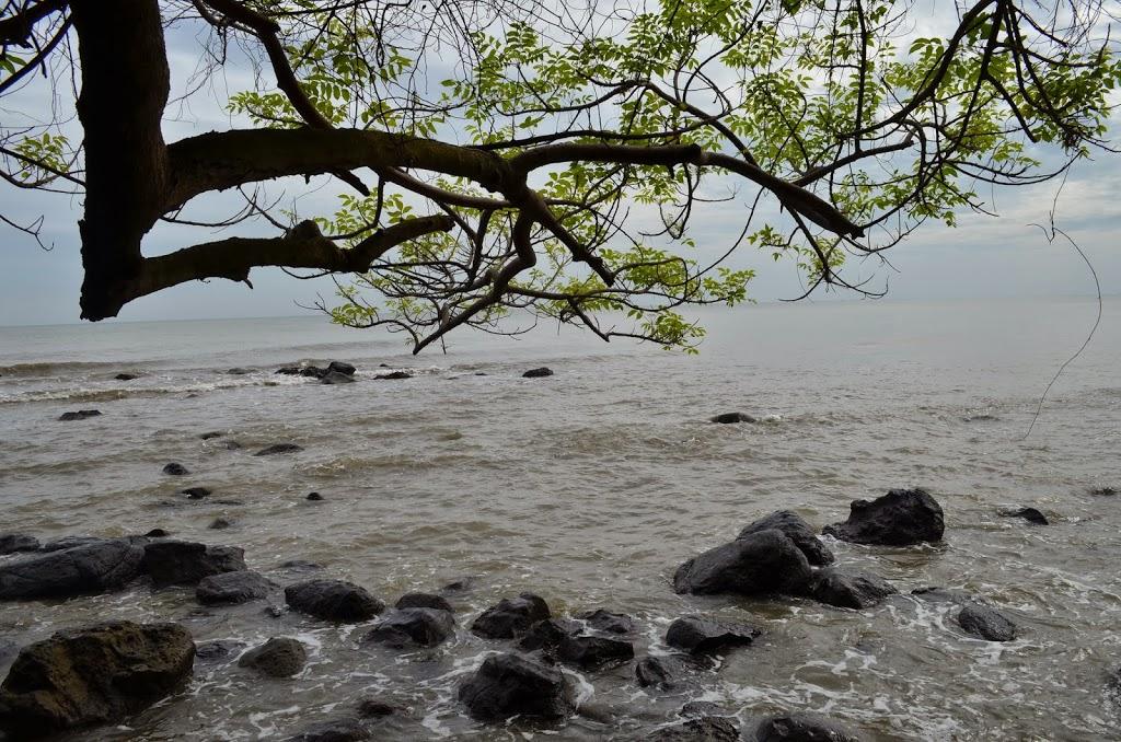 Explore Wisata Sharing Jawa Tengah 26 Tempat Terbaik Batang Hutan