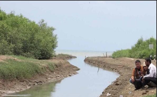 Menikmati Keindahan Hutan Bakau Pantai Sambilawang Netizenia Mangrove Kab Pati