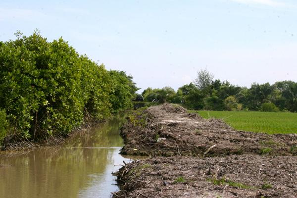 Menikmati Keindahan Hutan Mangrove Pati Jawa Tengah Pantai Sambilawang Kab