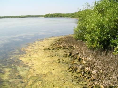 Menikmati Keindahan Hutan Mangrove Pati Jawa Tengah Wisata Salah Satu