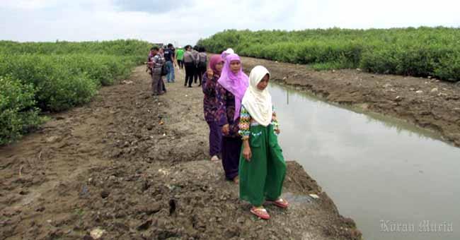 Pesona Hutan Mangrove Pantai Sambilawang Trangkil Pati Kabar Kota Kab
