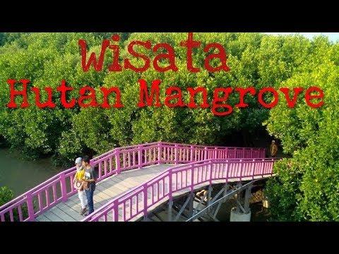Weekend Wisata Hutan Mangrove Kulonprogo Youtube 7 35 Alam Pantai