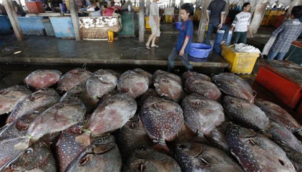 Pasokan Ikan Terhenti Tradisi Lomban Nasional Tempo Reuters Enny Nuraheni
