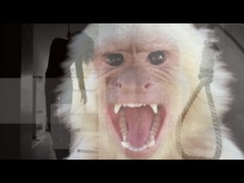 Pesugihan Monyet Putih Pulau Seprapat Pati Jawa Tengah Youtube Juwana