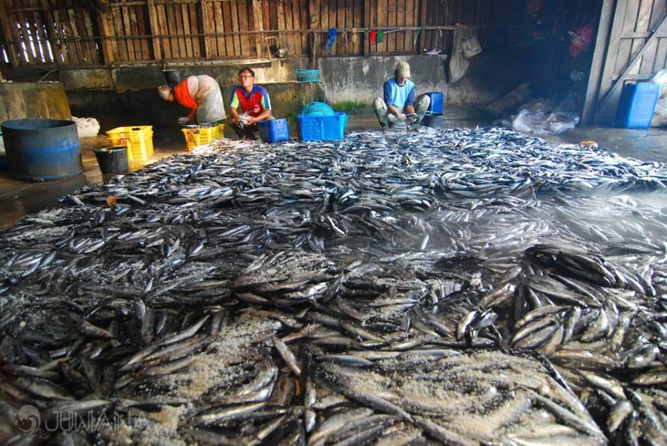 Tentang Juwana Pati Part Ii Batik Tulis Sampai Kampung Nelayan