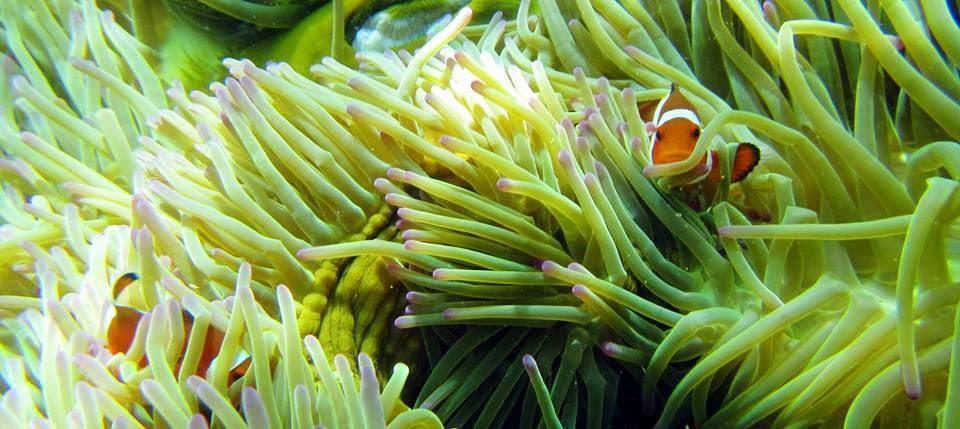 Pantai Perawan Gonda Mandar Explorer Nemo Dibawah Laut Kab Polewali