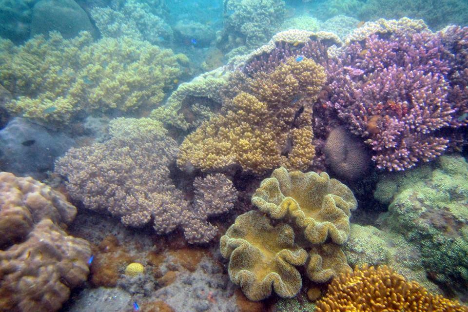 Pantai Perawan Gonda Mandar Explorer Terumbuh Karang Kab Polewali