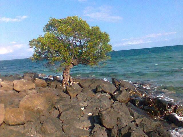 Pulau Landea Laporan Ekspedisi Susur Madatte Arts 2014 Blog Pohon