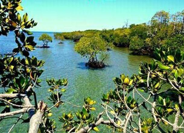 Yuk Gonda Mangrove Park Pantai Kab Polewali Mandar