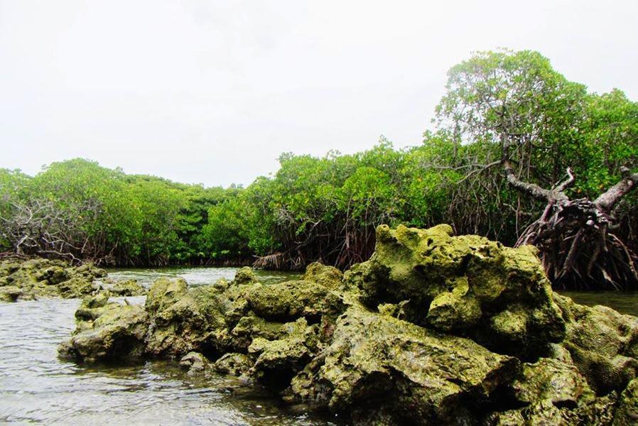 Indahnya Hutan Mangrove Gonda Desa Laliko Polewali Mandar Blog Bagian