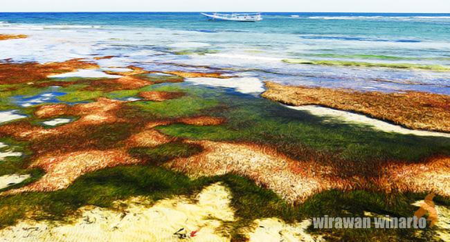 Labuang Terabaikan Tunawisma Meskipun Keunikan Kontur Pantai Membuatnya Tetap Tidak