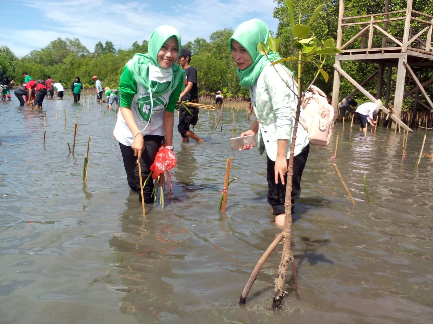 Hut Polman 57 Komunitas Mangrove Bersama Dishutbun Tanam Mampie News