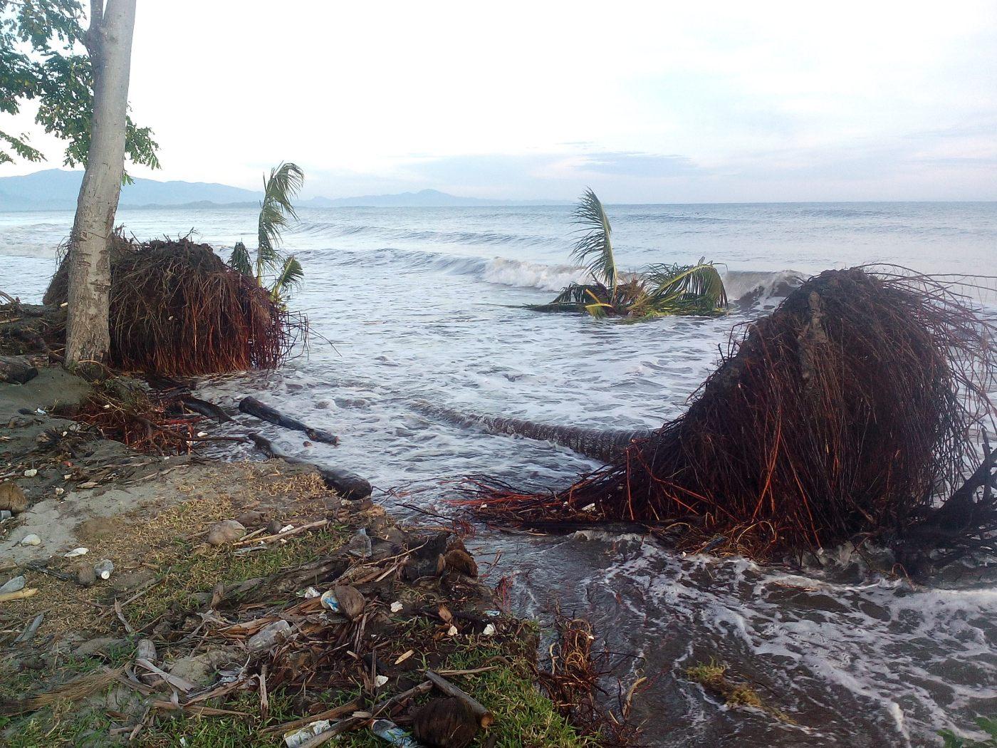 Pohon Mangrove Mampie Berkurang Salah Satu Penyebab Abrasi Pantai Kab