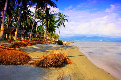 Sistem Informasi Kebudayaan Pariwisata Polman Pantai Palippis Pulau Dea Mampie
