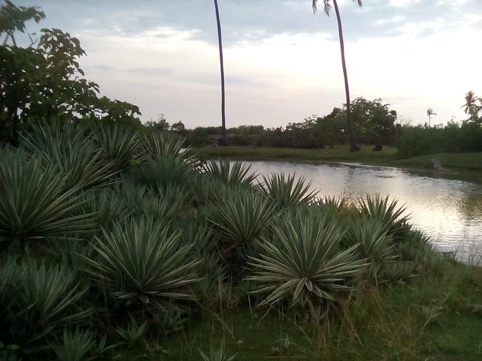 Wisata Pantai Tanjung Buku Mapilli Polman Blog Kompa Dansa Mandar