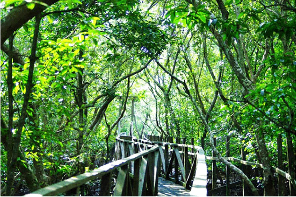 10 Tempat Wisata Balikpapan Wajib Dikunjungi Hutan Bakau Margomulyo Kota