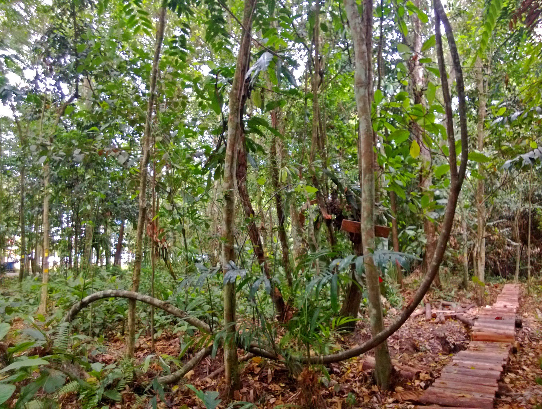 Bakanekobaka Januari 2015 Foto 8 Februari 2014 Hutan Kota Untan