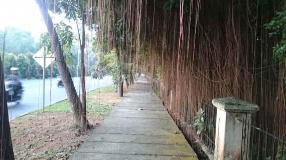 Cas Baterai Tubuh Olahraga Pagi Pontianak Post Hutan Kota Untan