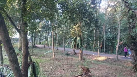 Cas Baterai Tubuh Olahraga Pagi Pontianak Post Menelusuri Jalan Hutan