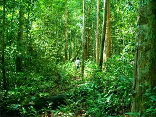 Hutan Kota Arboretum Sylva Untan Pontianak Kalimantan Barat Kawasan Pelestarian