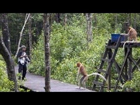 Keindahan Hutan Kota Ketapang Part Ii Youtube Untan Kab Pontianak