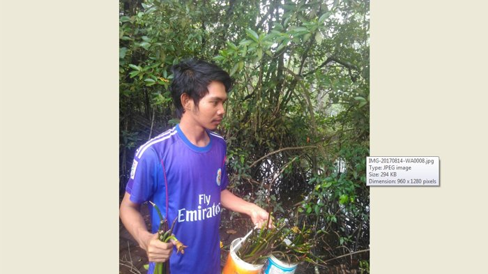 Mahasiswa Untan Inisiatif Tanam 300 Bibit Mangrove Ketapang Hutan Kota