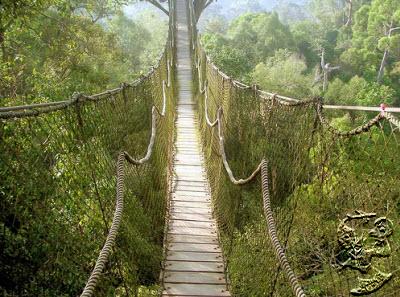 Taman Nasional Baka Bukit Raya Kalimantan Barat Wisata Pontianak Terdapat