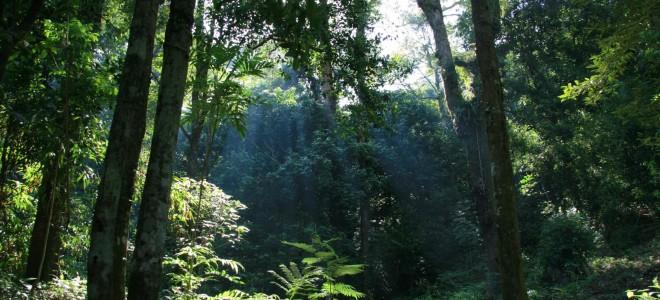 Taman Nasional Gunung Palung Kalimantan Barat Wisata Pontianak Hutan Kota