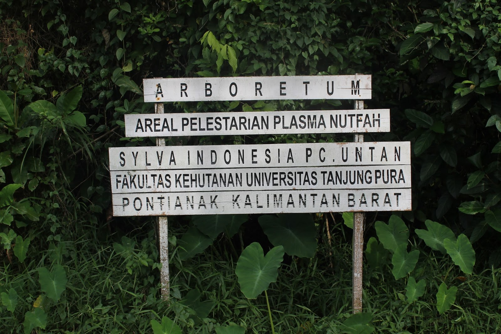 Tempat Wisata Pontianak Menarik Dikunjungi Info Hutan Kota Untan Kab