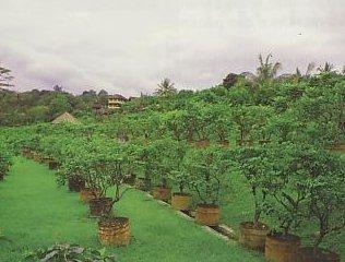 Dge Spectra Fairus Zabadi Share Experience Culture Agrowisata Kebunn Anggur