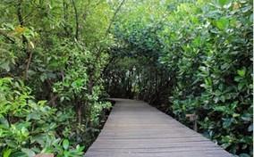 Pesona Probolinggo Wisata Hutan Mangrove Salah Satu Tempat Berada Pesisir