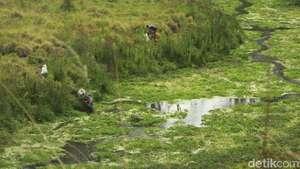 Liburan Probolinggo Candi Sisa Majapahit Terkait Savana Sikasur Pemkab Segera