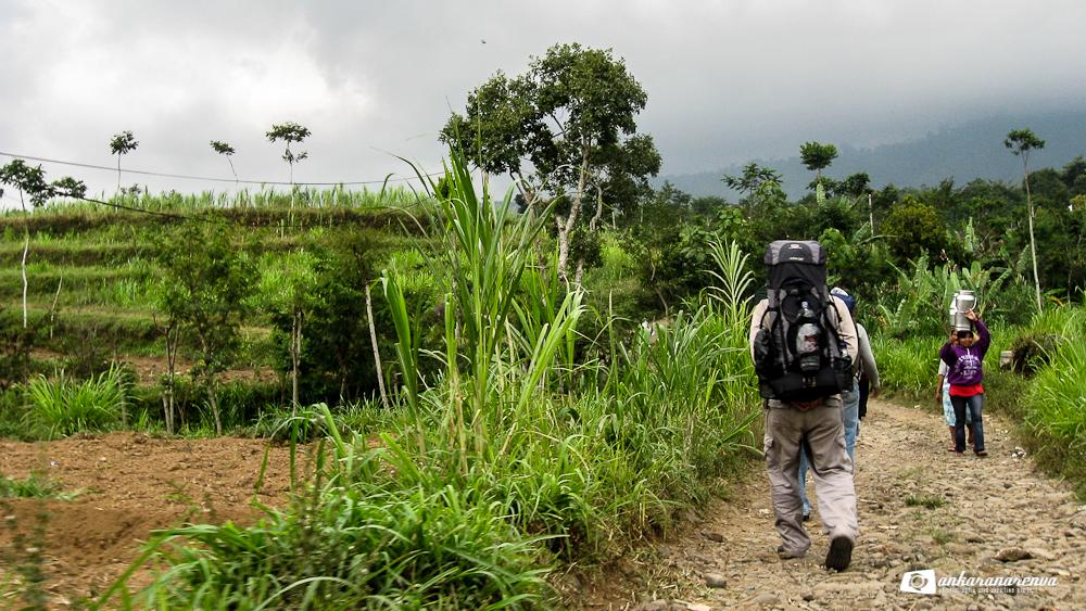 Gunung Argopuro Jalan Luasnya Belantara Ankarana Renva Menuju Perbatasan Hutan