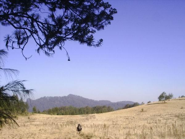 Gunung Argopuro Sabang Sampai Merauke Kab Probolinggo