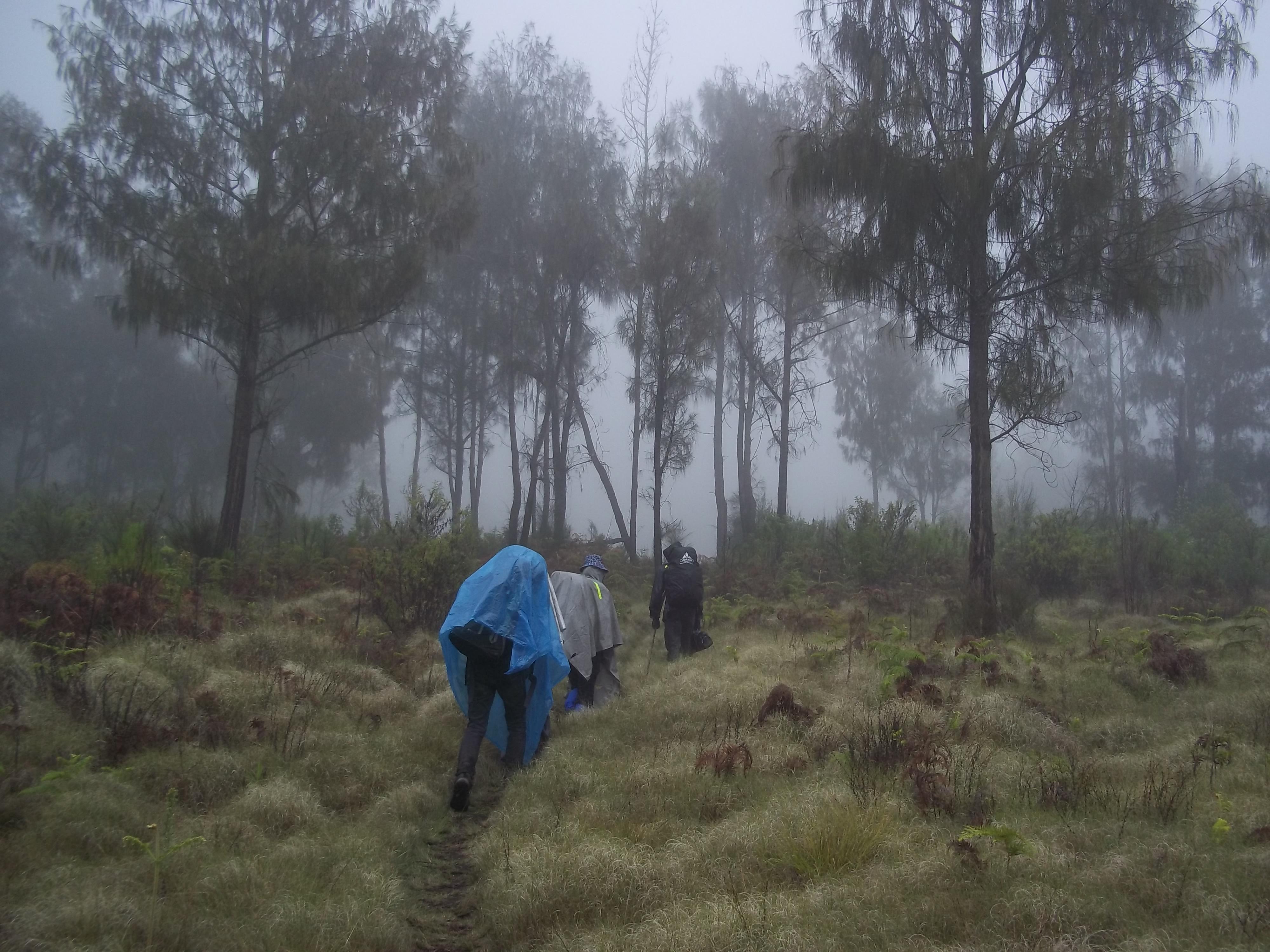 Mencari Firdaus Tersembunyi Argopuro Muhammadhalim22 Gunung Kawasan Wisata Tingkat Adventure
