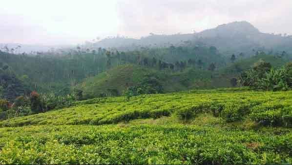 31 Tempat Wisata Probolinggo Halo Ngawi Kolam Renang Tra Taman
