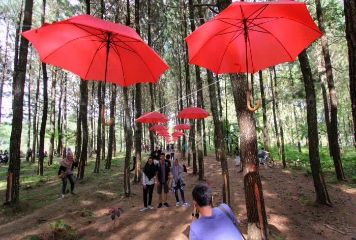 Pesona Pariwisata Seni Budaya Jendela Inspirasi Wisata Alam Hutan Pinus